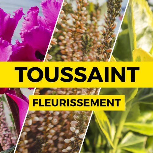 formule-toussaint-fleurissement